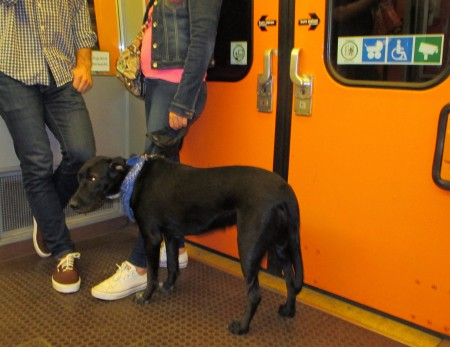 Dog on the underground