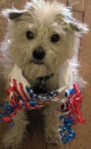 I HATE the 4th of July, Frankie says