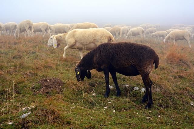 Writing Challenge Wrapup: Black Sheep & Single Genealogists